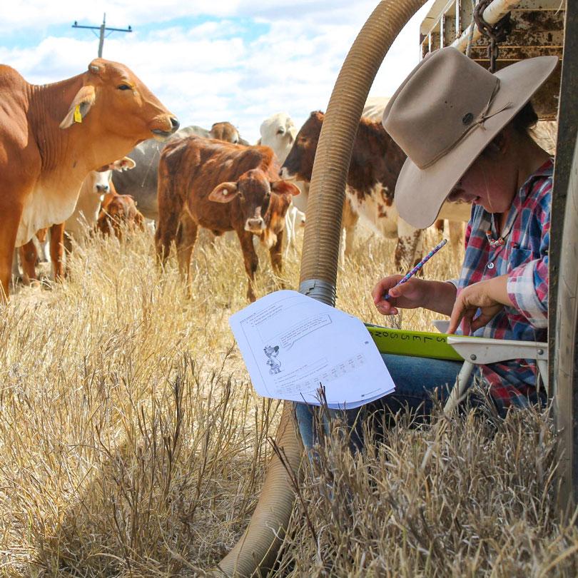 Child doing school work on cattle farm
